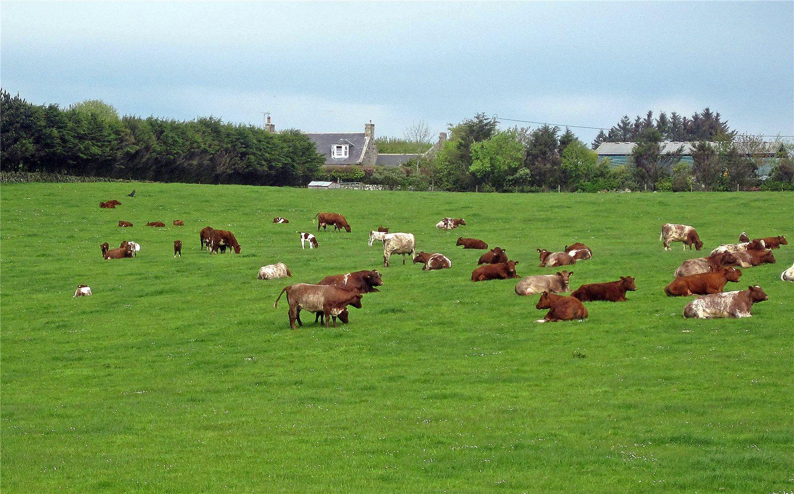 Farm / Ranch / Plantation for Sale at Balmedie Farm, Belhelvie, Aberdeen, Aberdeenshire, AB23 Aberdeenshire, Scotland
