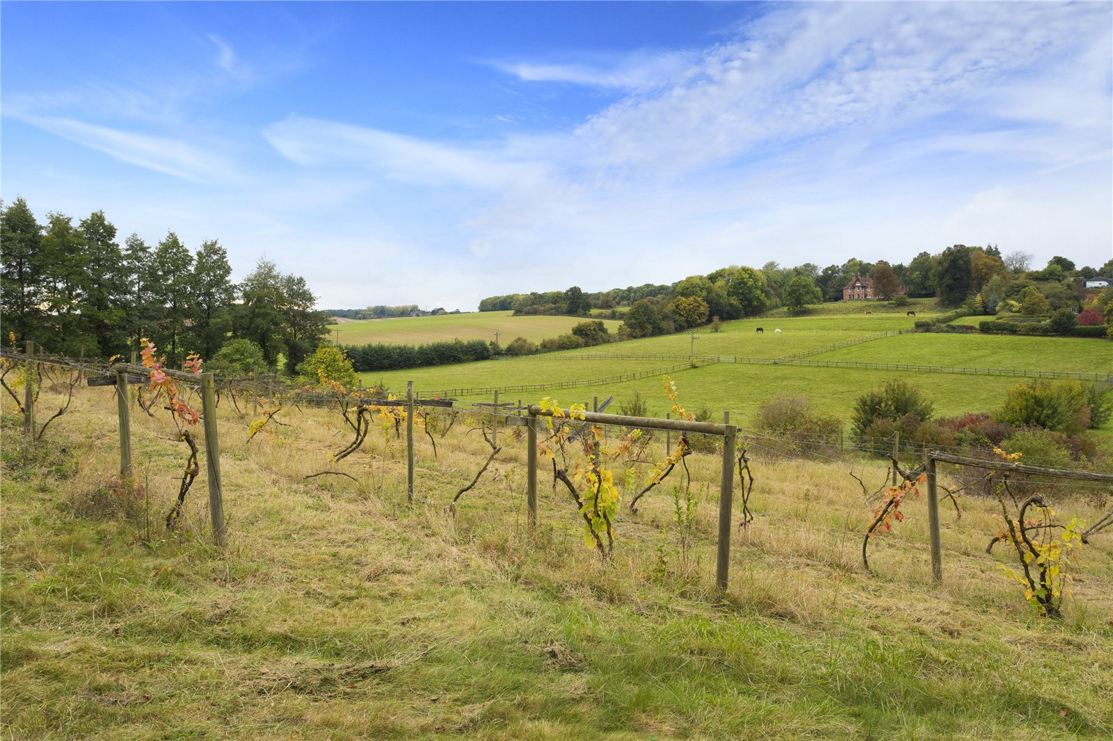 Additional photo for property listing at Throwley Road, Throwley, Faversham, Kent, ME13 Faversham, Angleterre