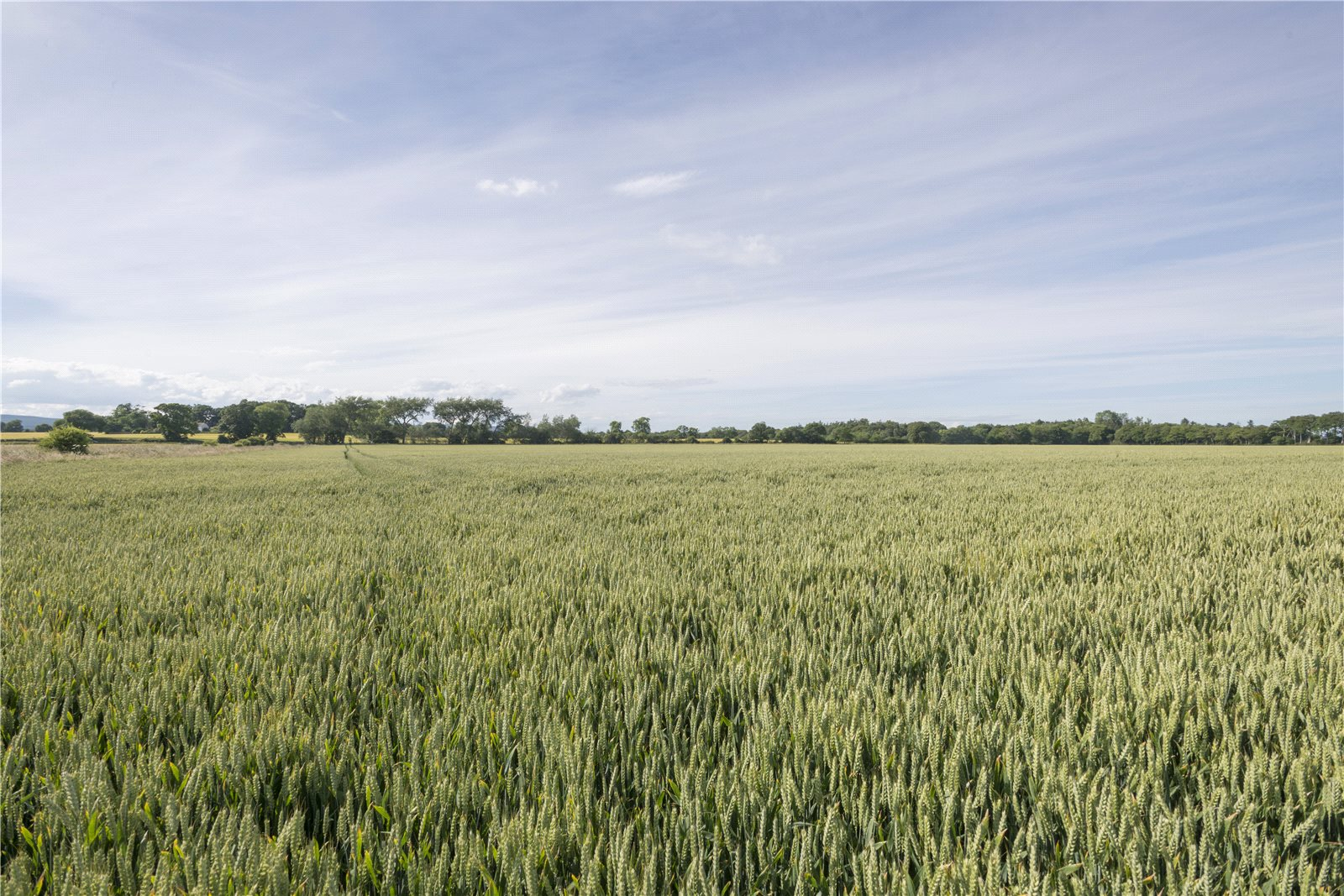 Farm / Ranch / Plantation for Sale at Tain, Ross-Shire, IV20 Scotland