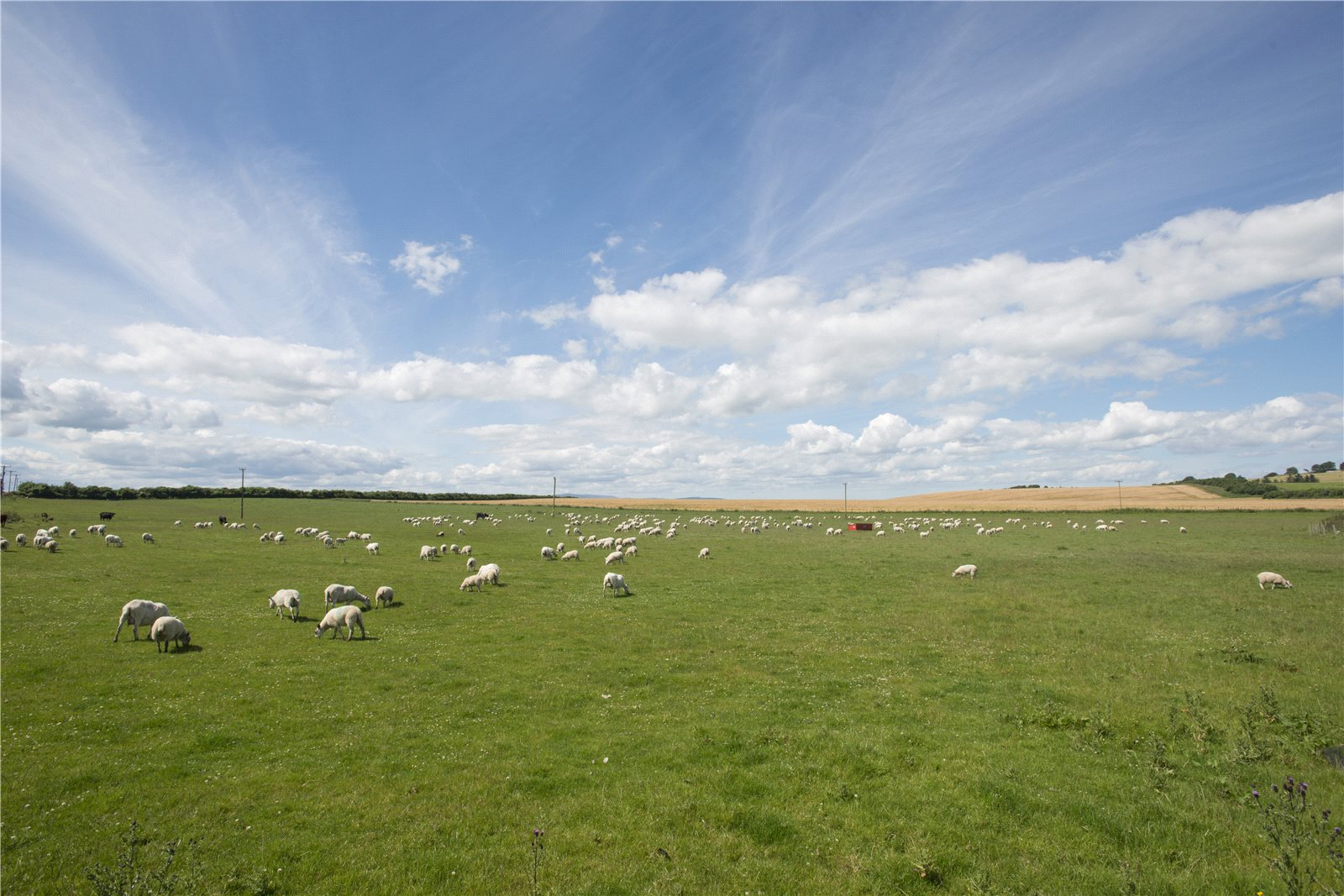 Additional photo for property listing at Castlecraig Farm, Nigg, Tain, Ross-Shire, IV19 Scozia