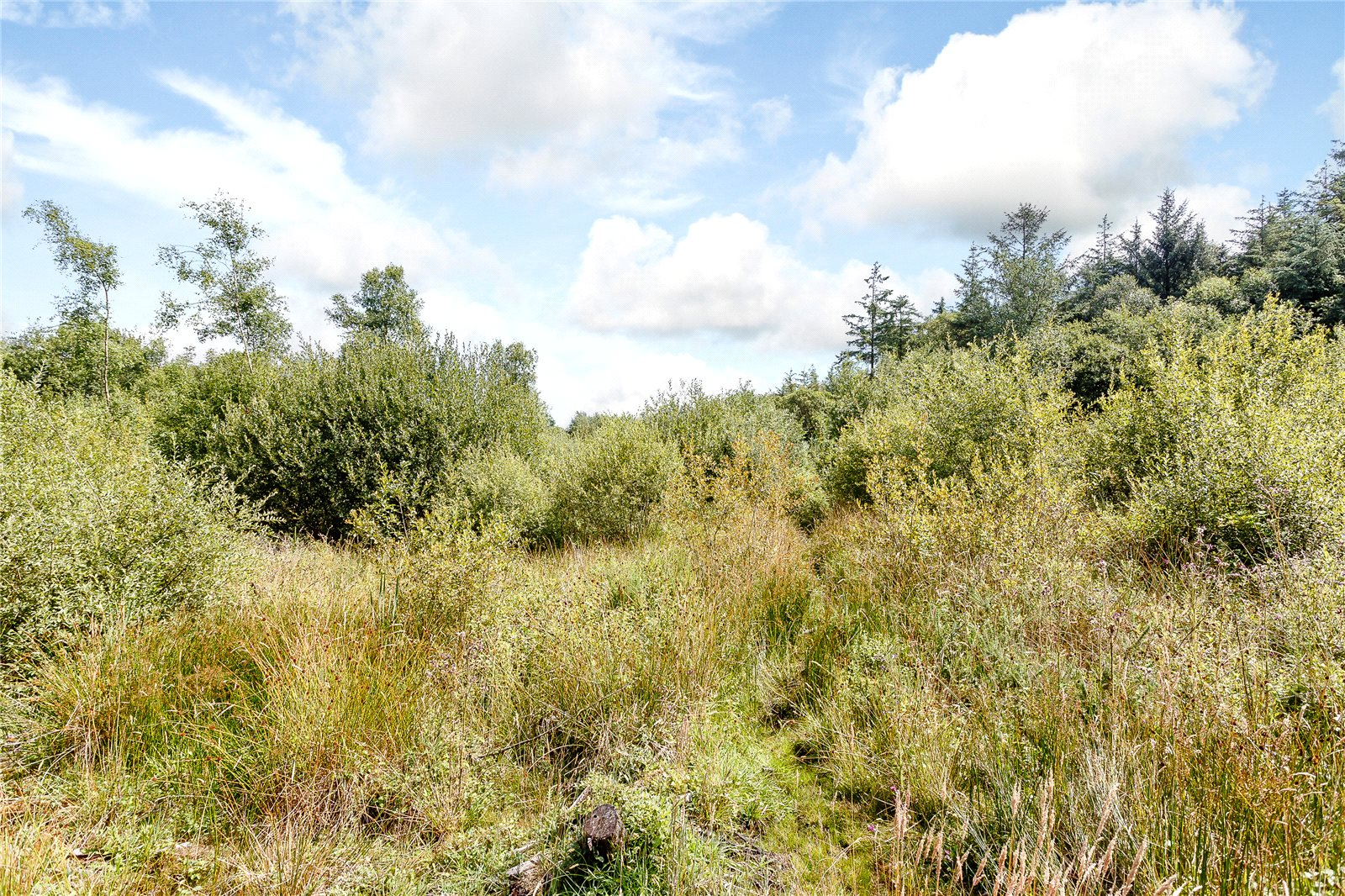 Additional photo for property listing at Stapley, Taunton, Somerset, TA3 Taunton, Engeland