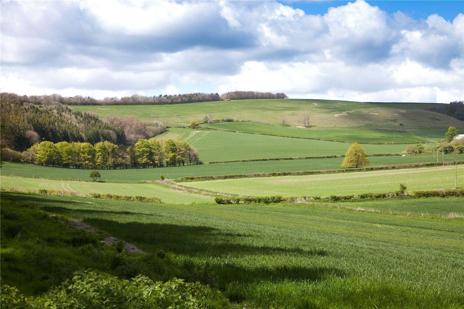 Hayvan Çiftliği/Çiftlik/Ekili Alan için Satış at Melcombe Farm, Melcombe Bingham, Dorchester, Dorset, DT2 Dorchester, Ingiltere