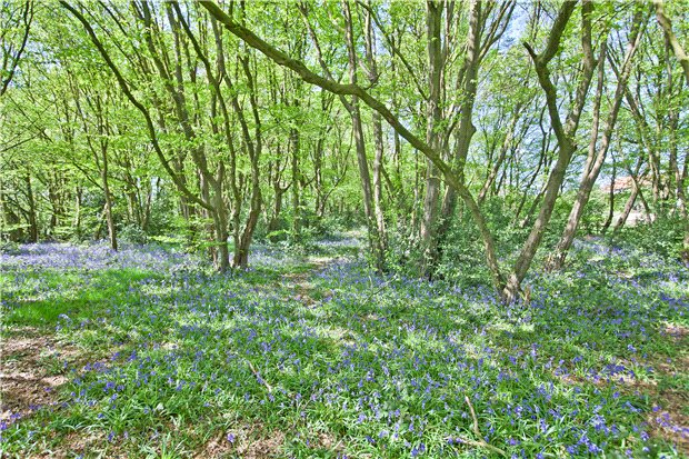 Additional photo for property listing at Woodcock Hill, Sandridge, St. Albans, Hertfordshire, AL4 St Albans, 英格蘭